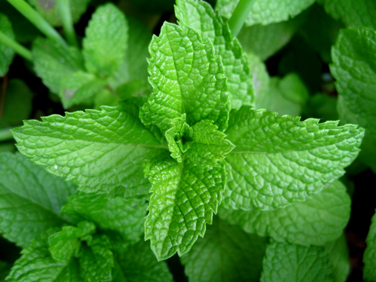 herbs - A regular local supply of pot grown herbs, full of health, vigour and vitality, waiting to assist you in your kitchen!Alas we do not offer cooking demonstrations but we will always be happy to sample your kitchen endeavours….(if you need a second opinion, you understand….)