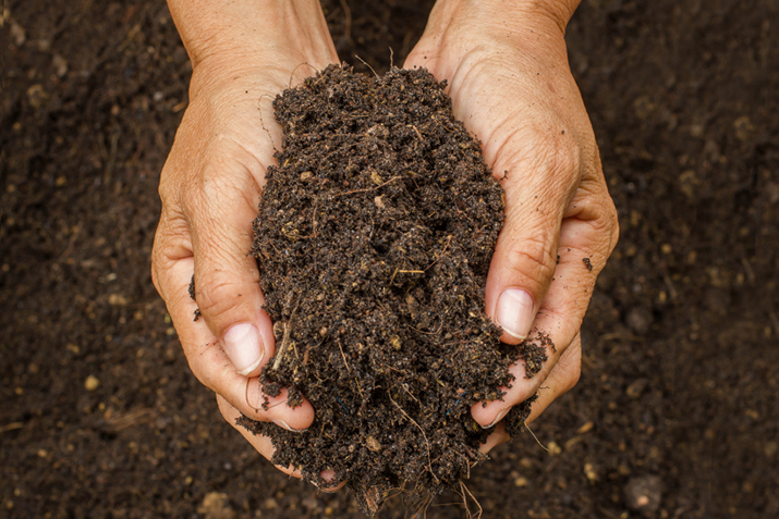 YOUR SOIL - It's worth spending time and money making it lovely!
