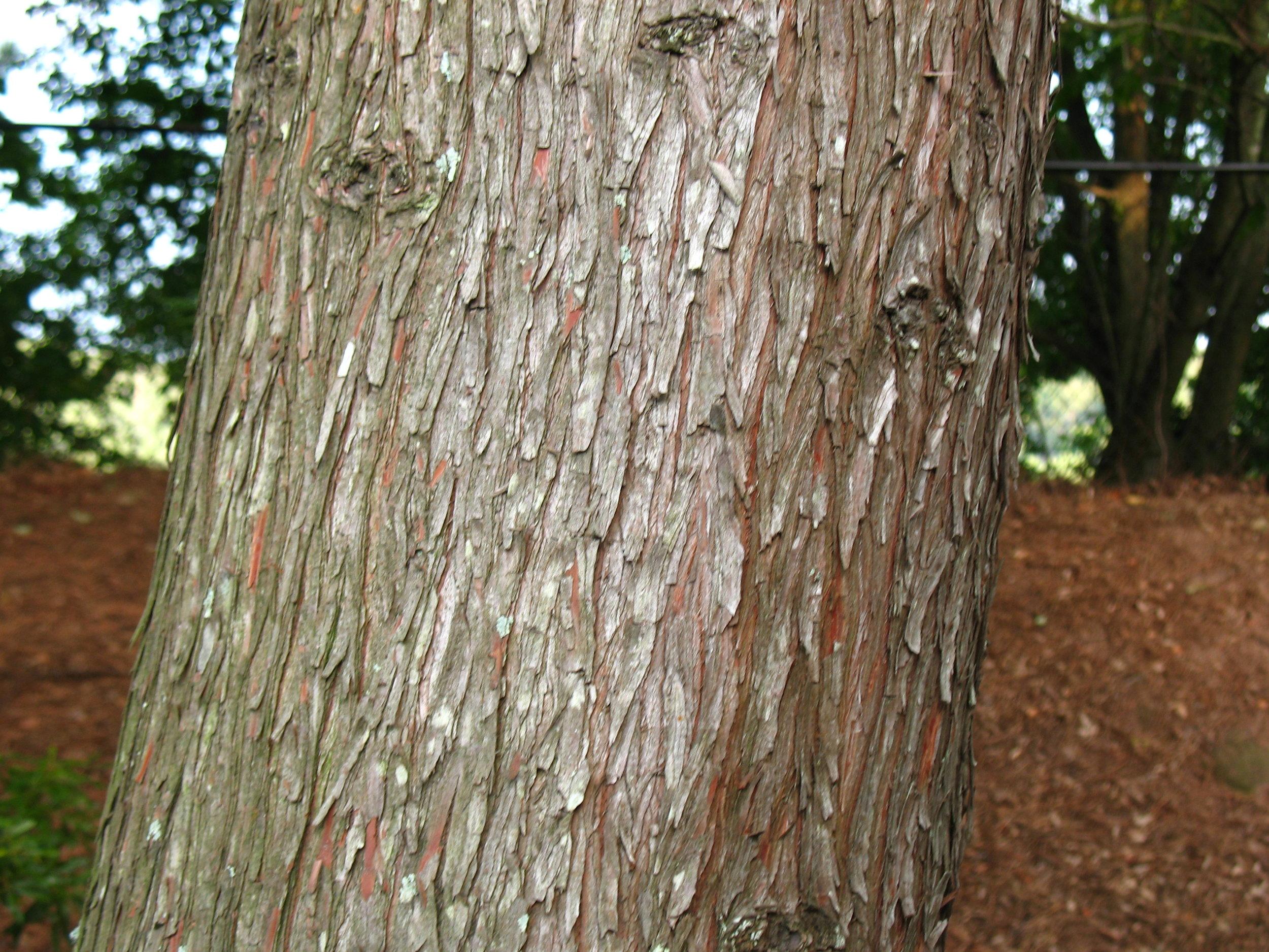 """   bark   "" by    rmkoske    is licensed under    CC BY 2.0"