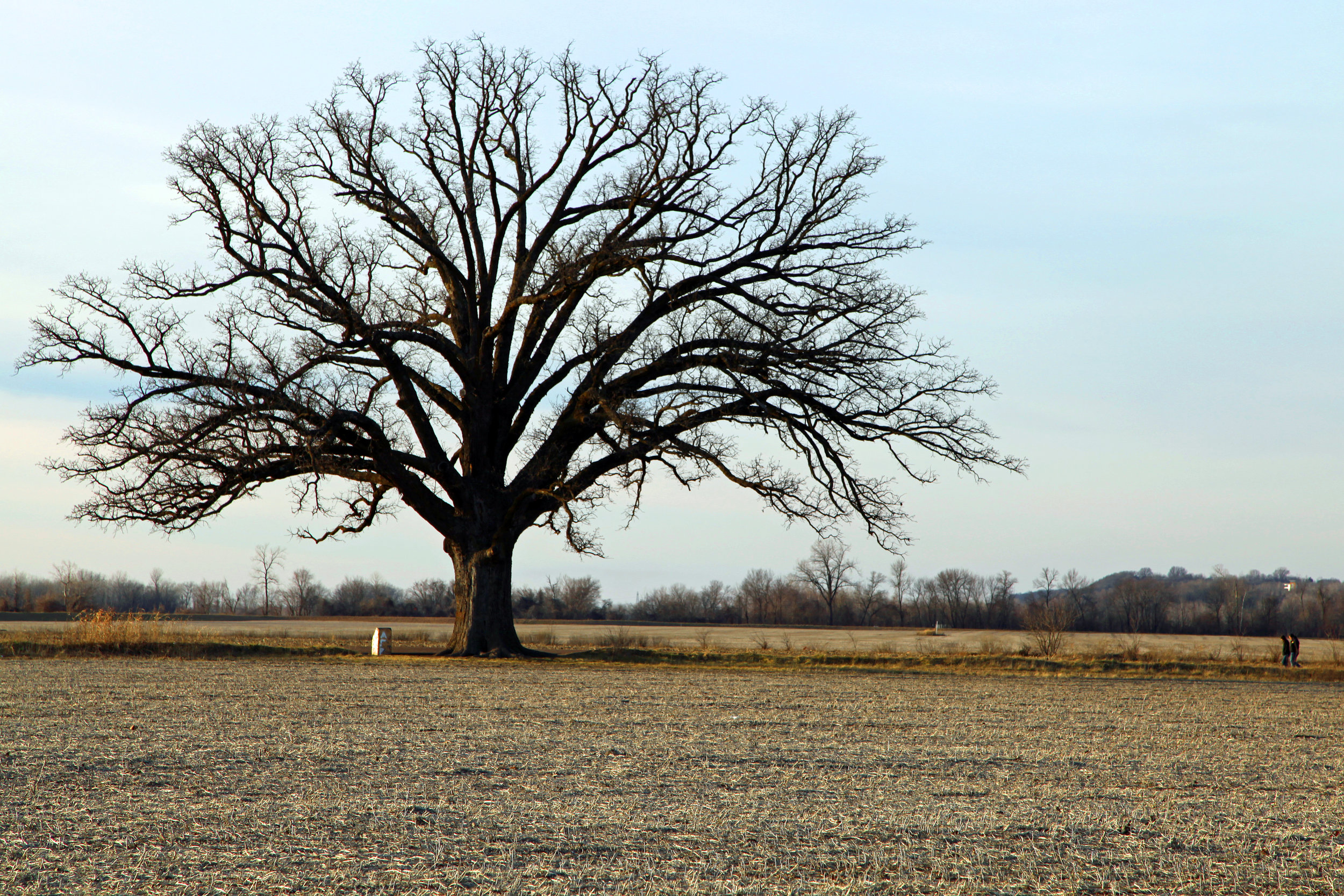 """""""   Two girls at Bur Oak Tree McBaine   """" by    Graham Higgs    is licensed under    CC BY 2.0"""