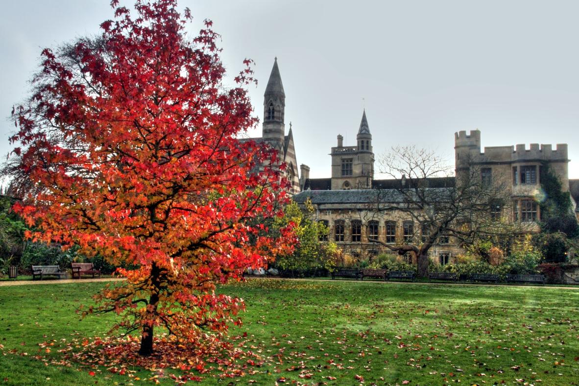 """   Liquidambar in Balliol's Garden Quad   "" by    Piers Nye    is licensed under    CC BY 2.0"