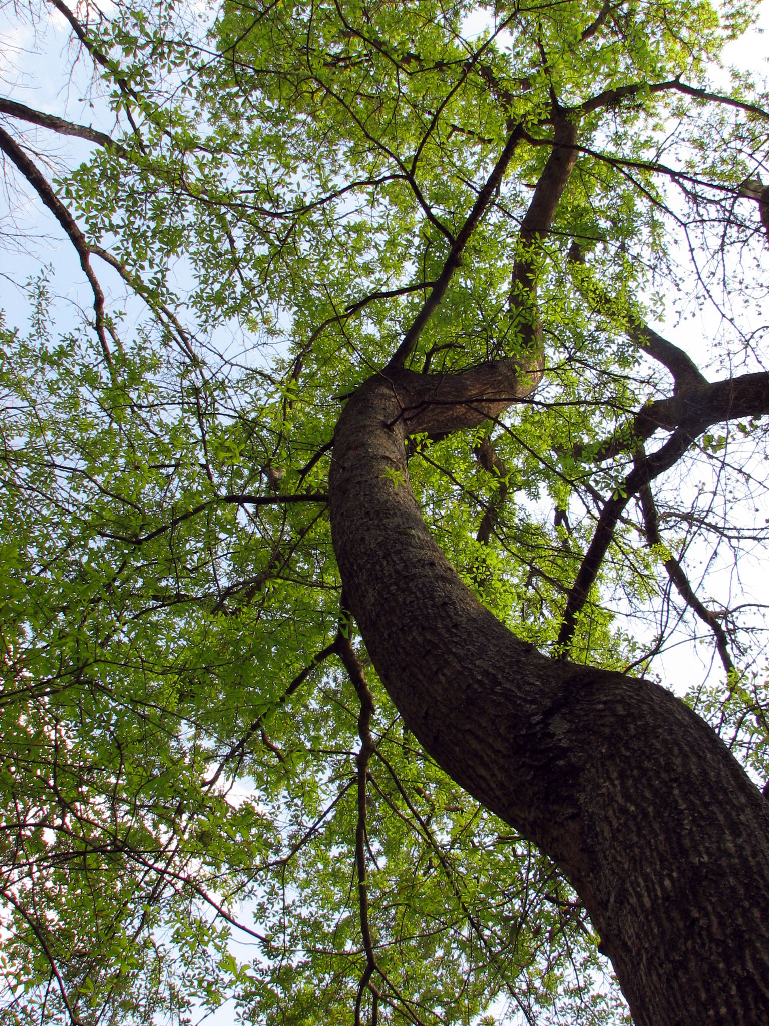 """   Water Oak   "" by    Katja Schulz    is licensed under    CC BY 2.0"