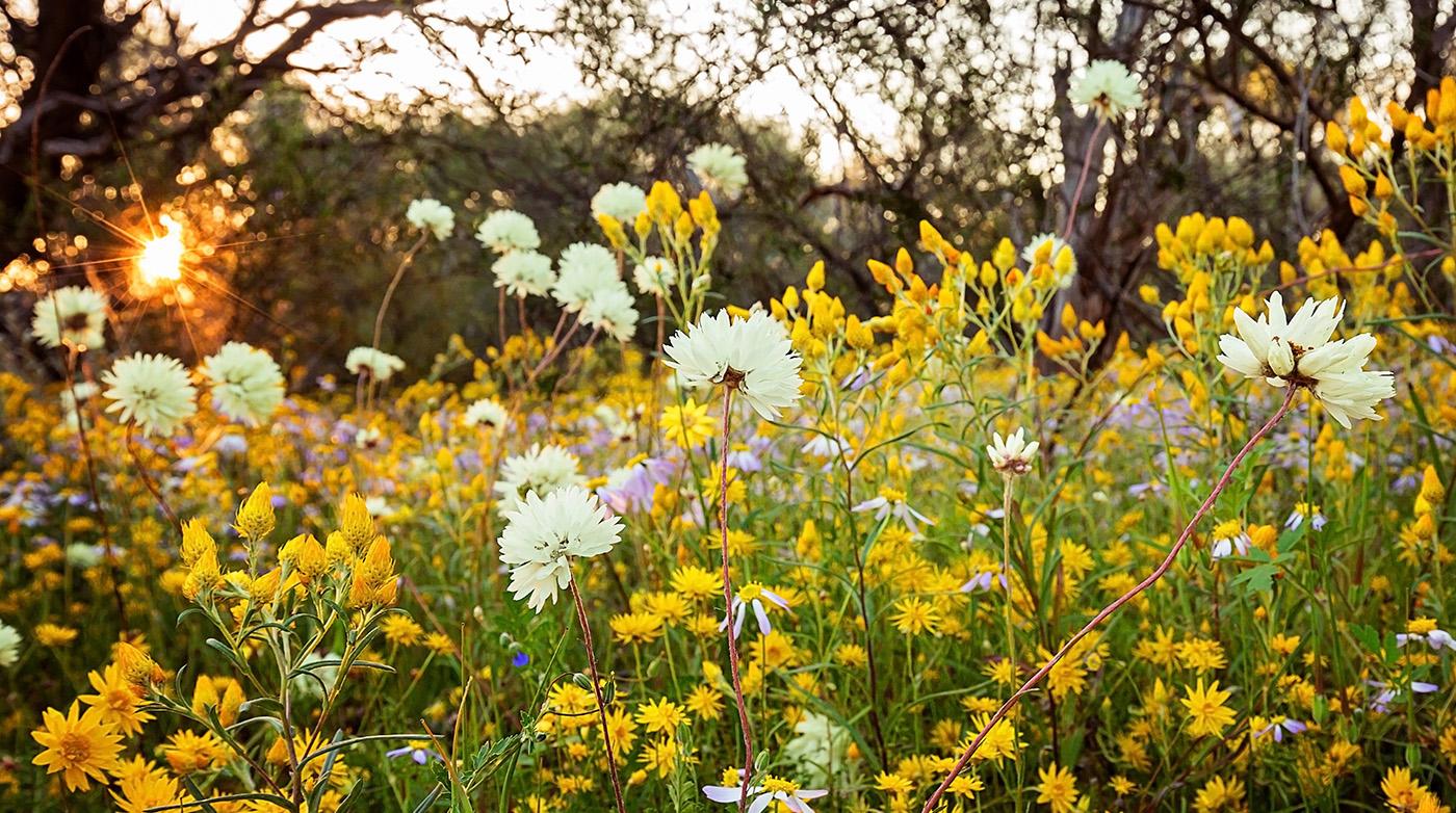 FlowersField.jpg
