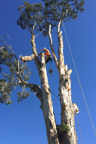 Tree-Removal---Rigging-&-Lowering-1a.jpg