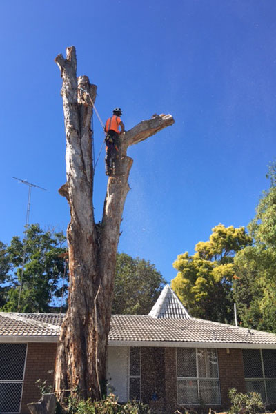 Tree-Removal---Rigging-&-Lowering-1c.jpg