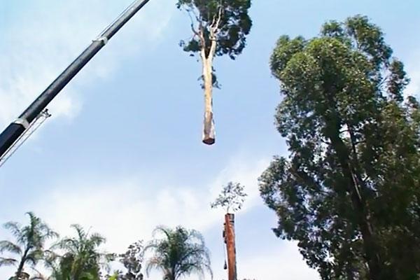 Tree-Removal-Crane-1a.jpg