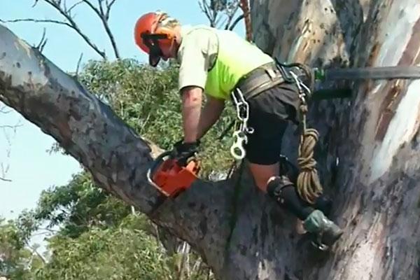 Tree-Removal---Crane-2a.jpg