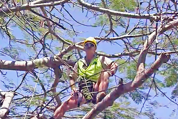 Pruning---Arborist-prepares-for--corrective-surgery-2b.jpg