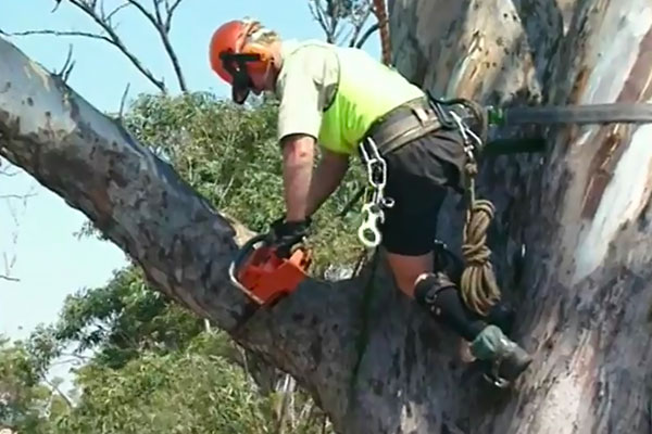 Wild-Life-Rescue--Cutting-branch-that-is-secured-to-Crane----1a.jpg