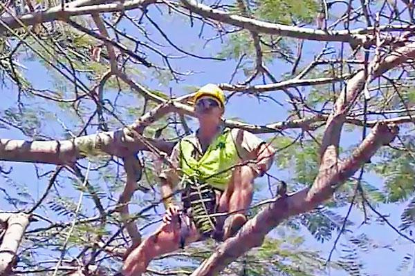 Tree-Surgeon---Prepares-for-corrective-surgery-1b.jpg