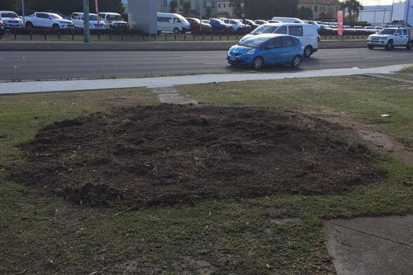 stump2.jpg