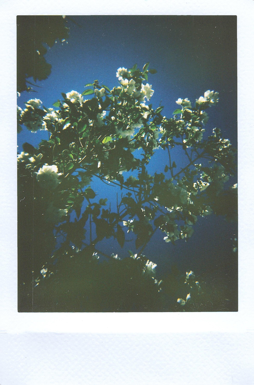 bloom-blooming-blossom-2568005.jpg