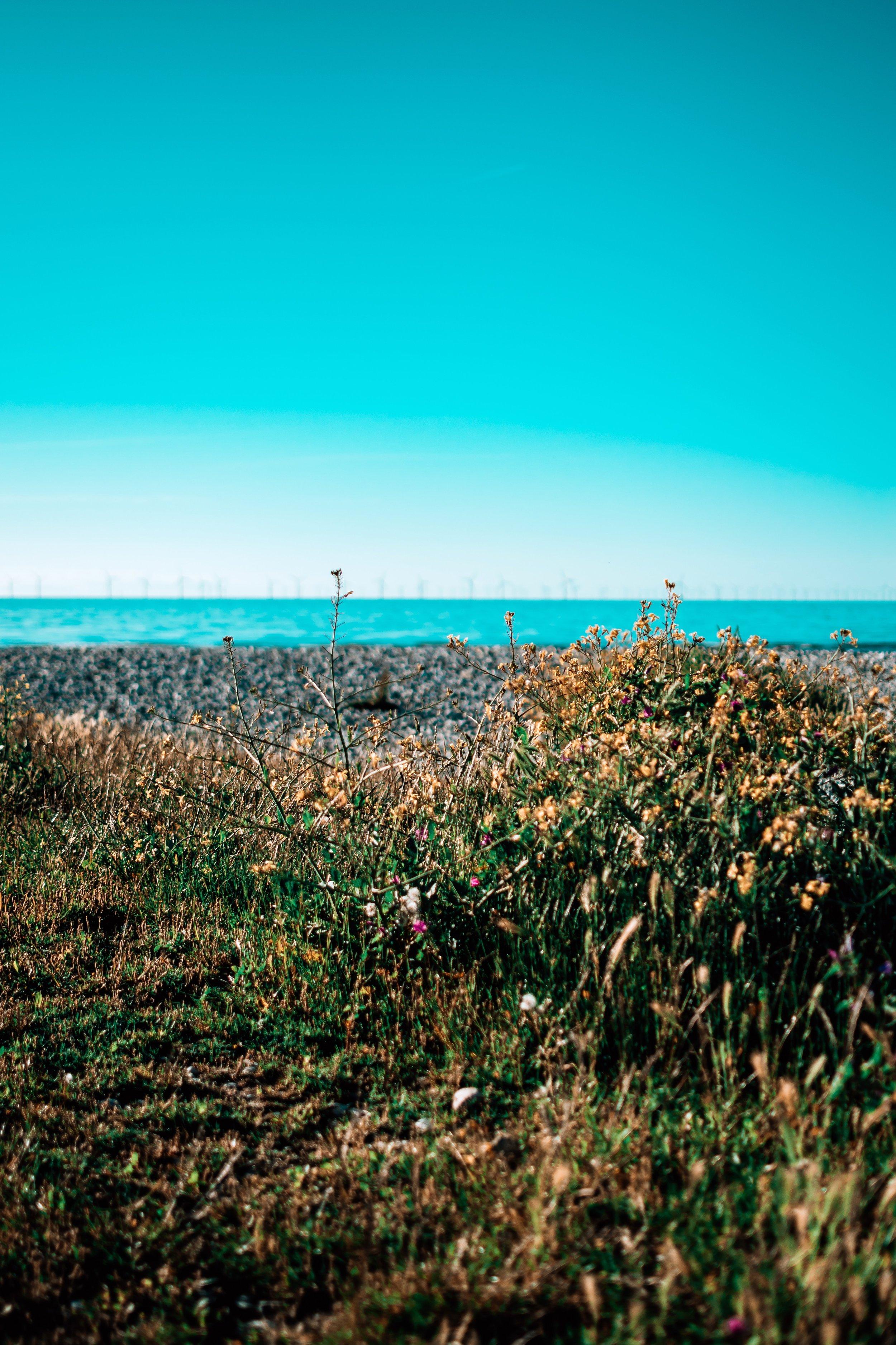 beach-bloom-blooming-2533788.jpg