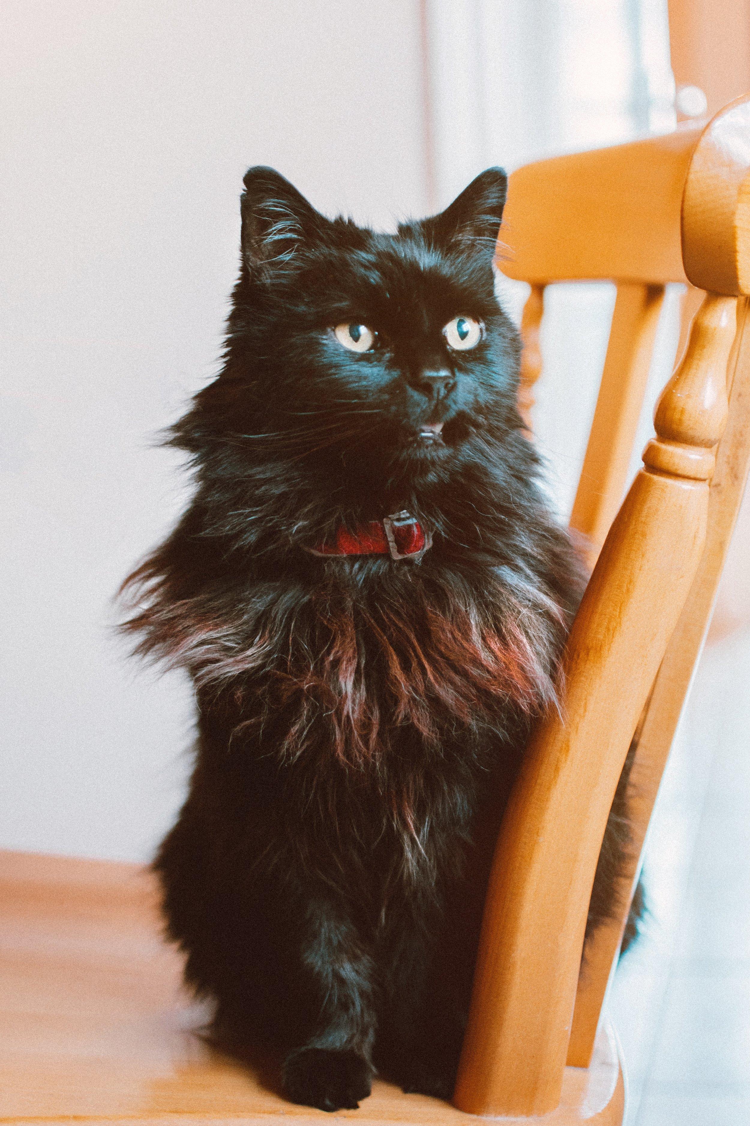 adorable-cat-close-up-1870320.jpg