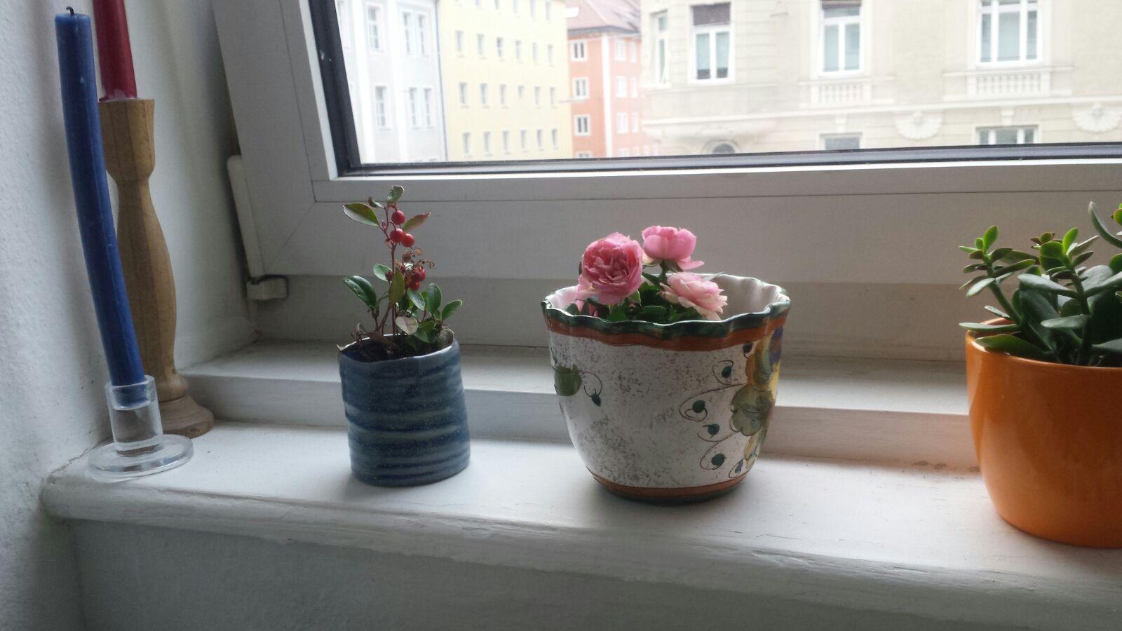 tado_plants.jpg