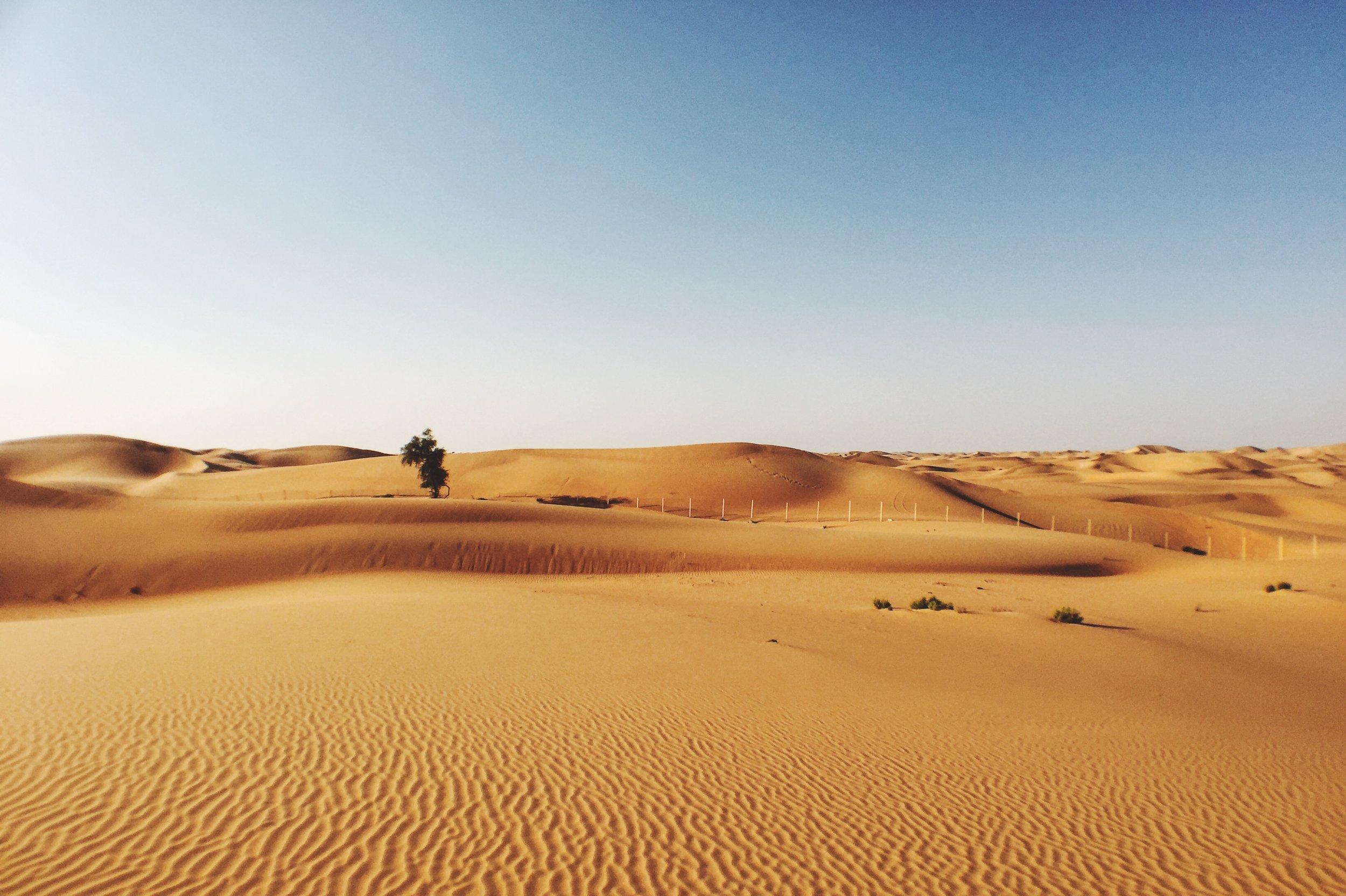 Arabian-Nights-Lorraine-Yeung-5.jpg