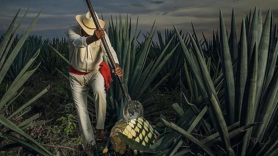 圖片來源自  Cultura Colectiva News