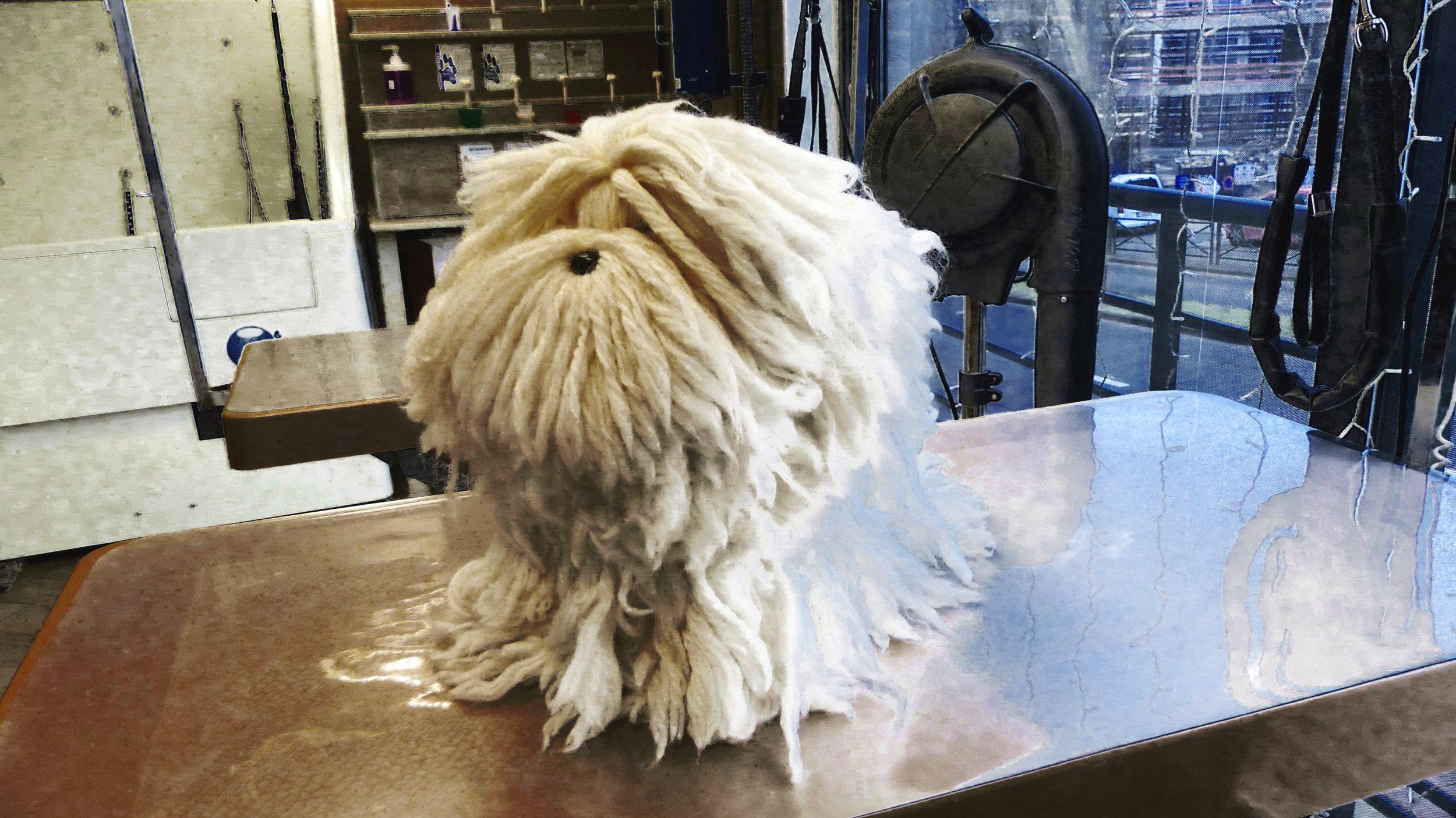 Model Dog - AVANT
