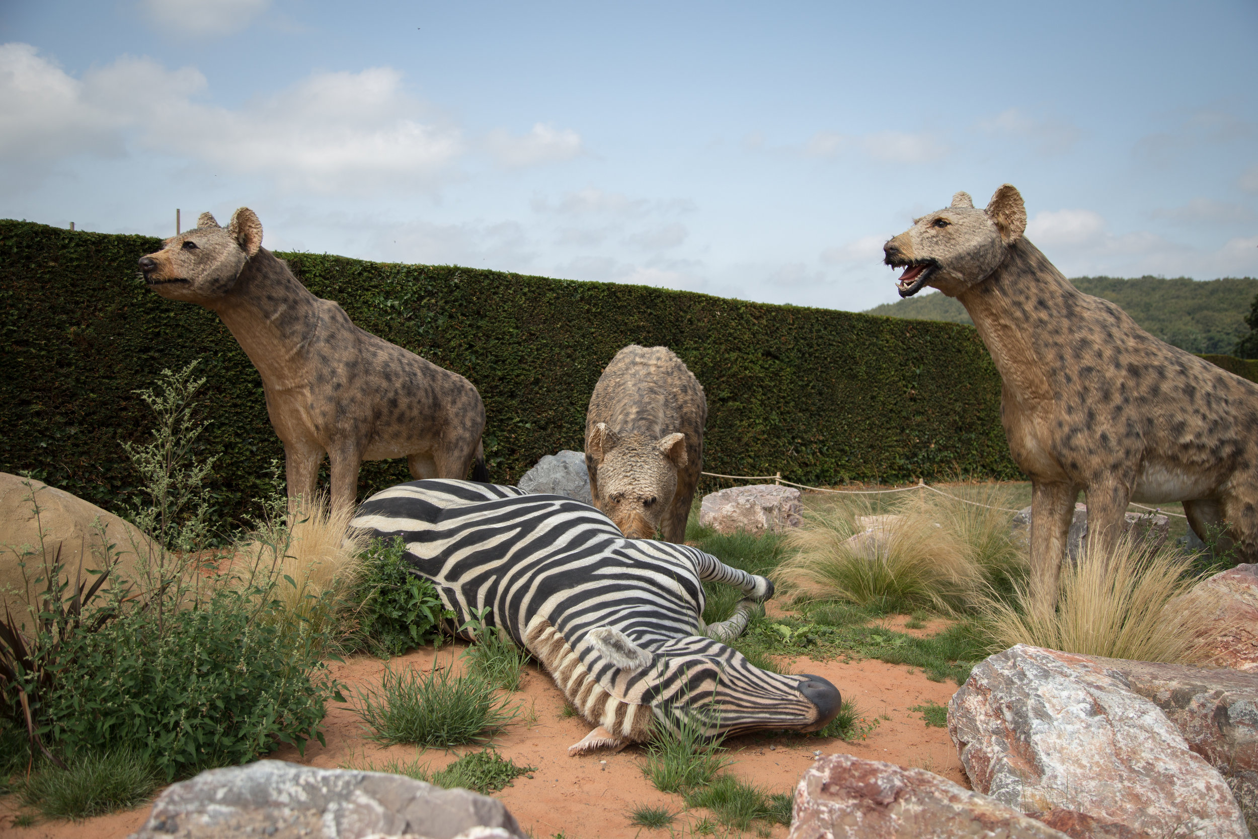 Electrical works carried out at the Predators exhibition at Longleat