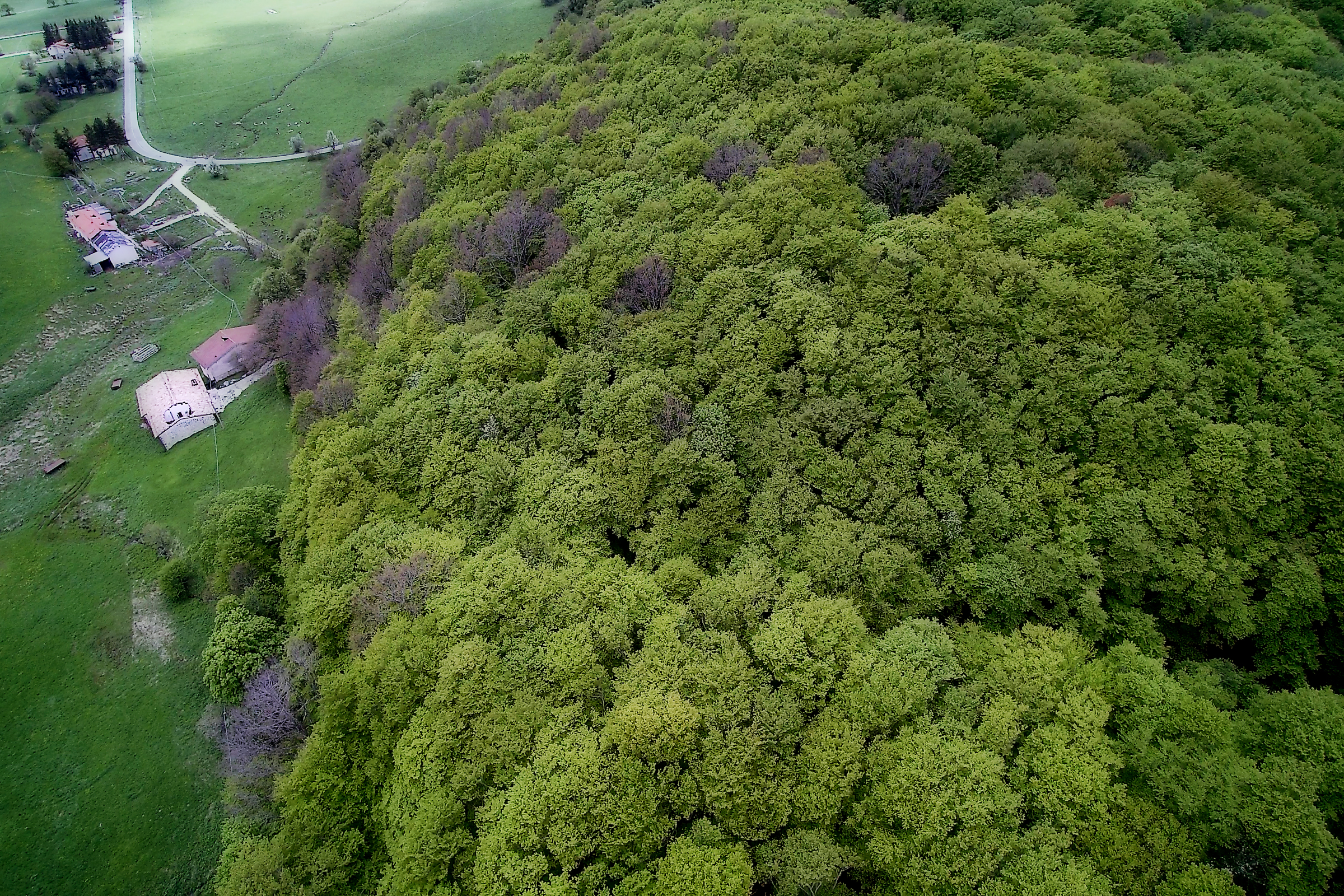 "Aerial view of the beech-dominated forest of  Bosco Sant'Antonio  (""St. Anthony's forest"") near Pescocostanzo, Abruzzo, with the adjacent church dedicated to St. Anthony the Abbot and St. Anthony of Padua, and examples of the distinctive pollarded trees that characterize the forest"