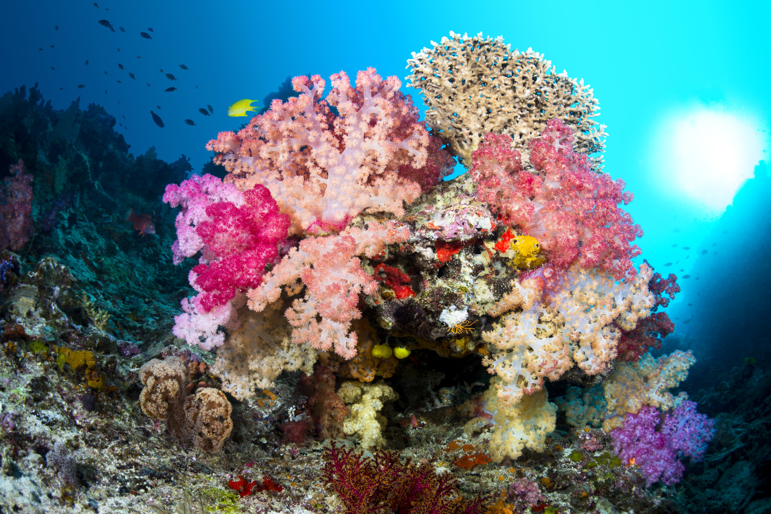 vibrant-coral-reef-PFVUTWT.jpg