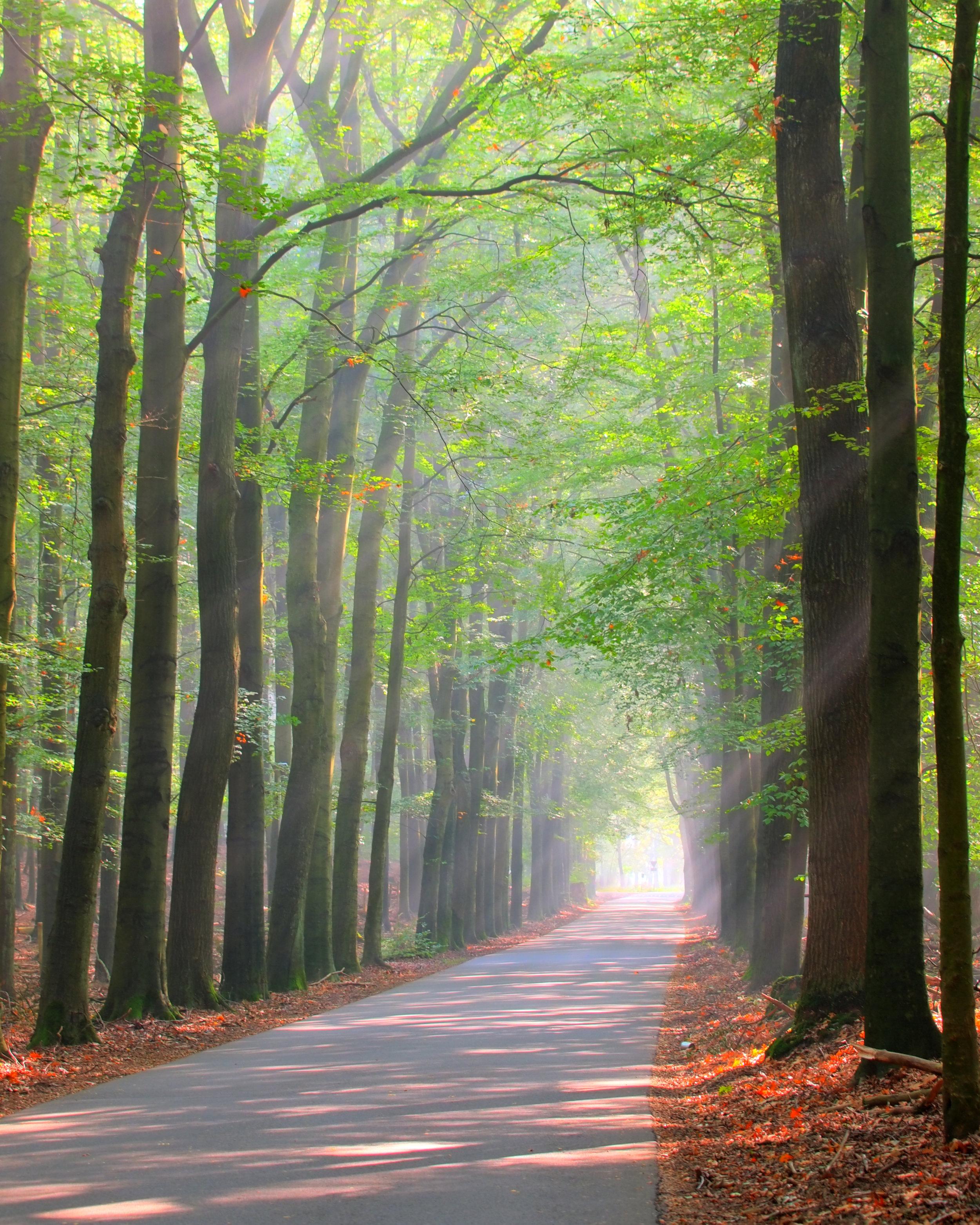 brightly-lit-forest-lane-P9BCNZP.jpg