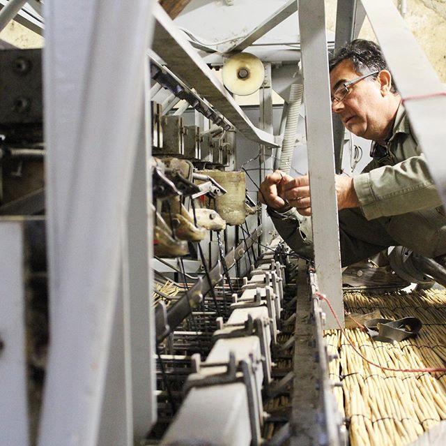 André Calba est Sagneur en Camargue. Le Sagneur coupe et travaille le roseau de Camargue pour créer des installations permettant de se protéger du soleil. Un métier très peu connu et qui risque de disparaître. Découvrez l'histoire d'André et celle du roseau sur la chaîne YouTube de Parlons français