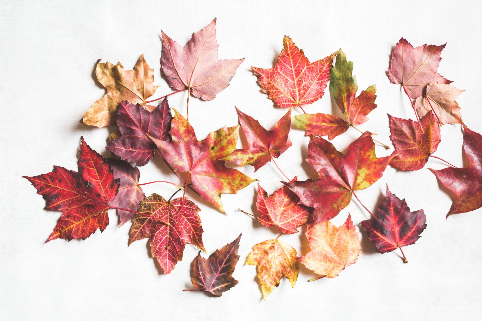 Red_Autumn_Leaves-201.jpg