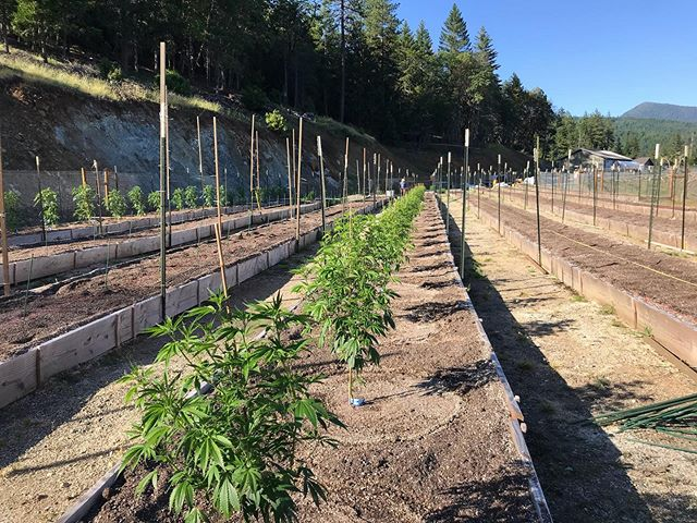 💛 Dare to begin 🌱 . . . . #welcomehome #craftcannabis #plantedwithlove #notallcannabisisequal #sungrown #dontquitonyourdaydream #oregonroots #dreambig #outdoor2019 #farmlife