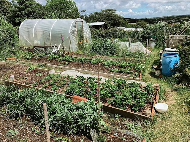 First gardening lesson at Janet's allotment. Thanks @janetpye13 for all your tips! 🍓 . . . #allotment #allotmentlife #gardening #garden #gardeningtips #growyourownveg #nature #organicgardening #gardeninspiration #plantsgram #outdoors #farmtotable #greenhouse #nodig #allotmentuk #cornwall #greenmillproject