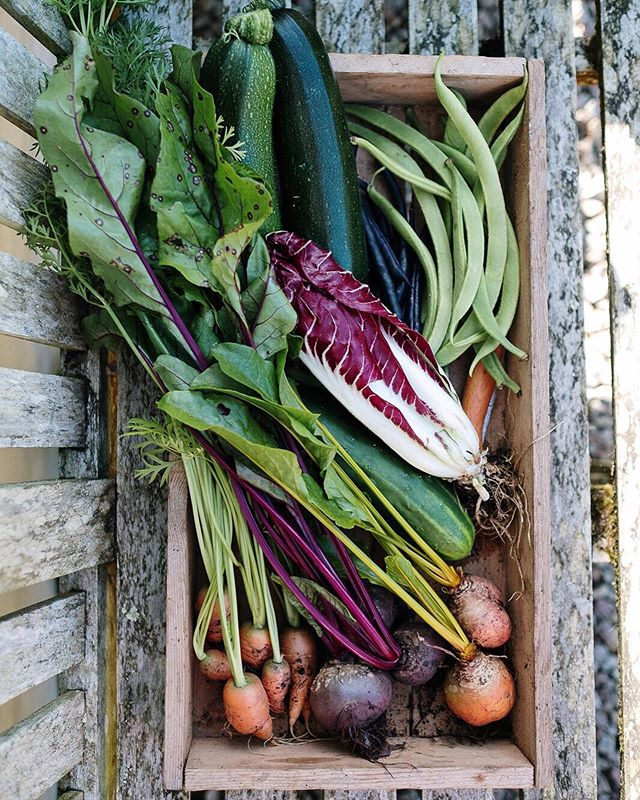Some of the vegetables that we are still harvesting from our kitchen garden. I had the desire to grow my own garden and I got it, but I never imagined that such beautiful and abundant vegetables would grow. I encourage anyone who has the opportunity to grow their own vegetables to do so, and don't think twice about it! 😊 . . . #kitchengarden #gardens #beautifulgardens #growyourownfood #organicvegetables #vegetables #nature #harvesting #outside #slowlife #organicgardens #roots #seeds #nodiggarden #nodig #cornwall #photography #greenmillproject