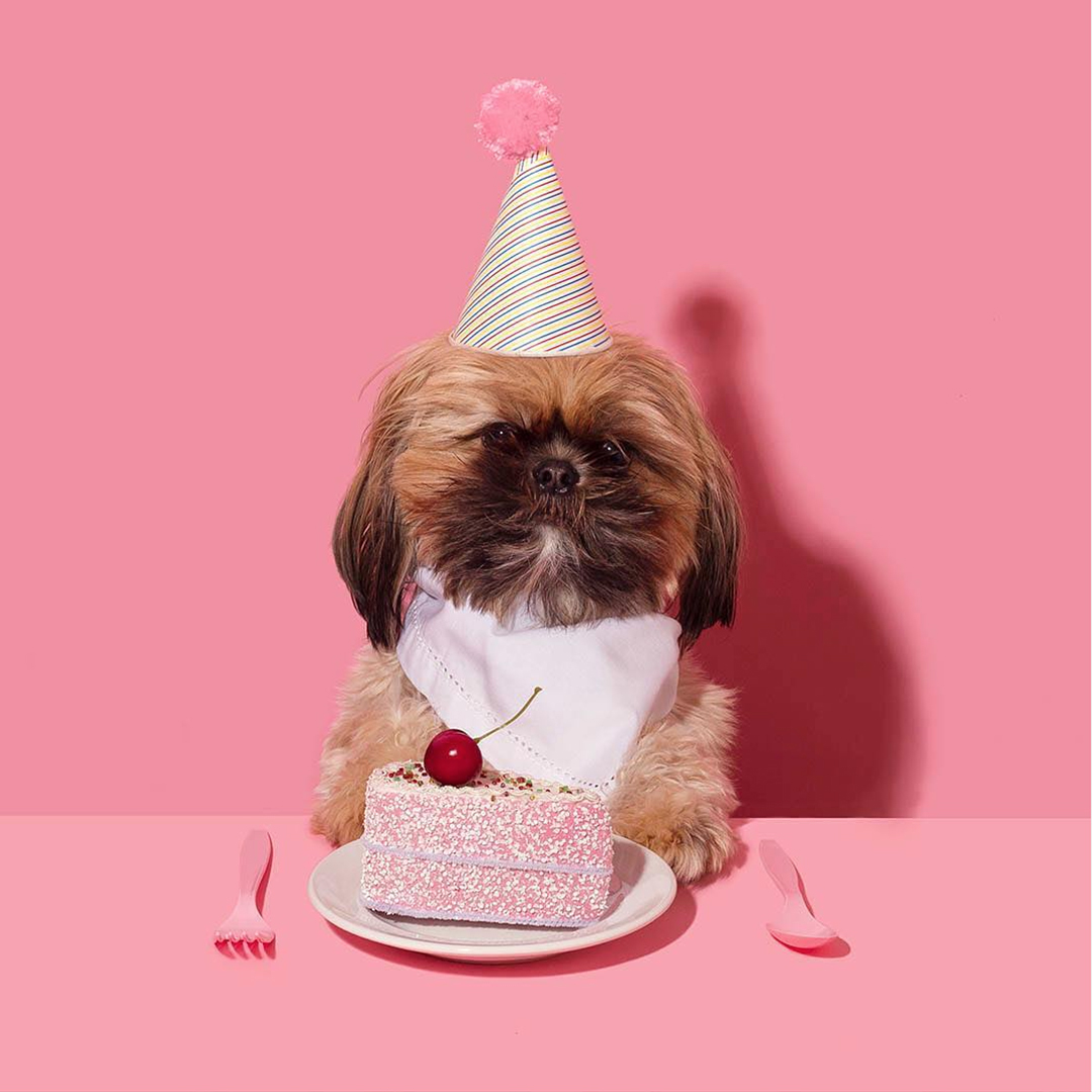 Dog with Dessert | Amy Shamblen, creative photographer | Masters of Content Creation,  The Content Designer Blog.