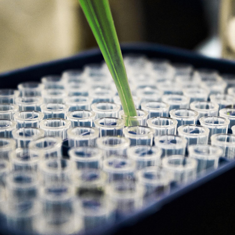 - —El OECM está integrado por investigadores, médicos y asociaciones de pacientes que tienen relación con el uso de cannabis medicinal.—