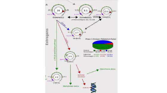 Estrogen Metabolism - DUTCH test by Precision Analytical