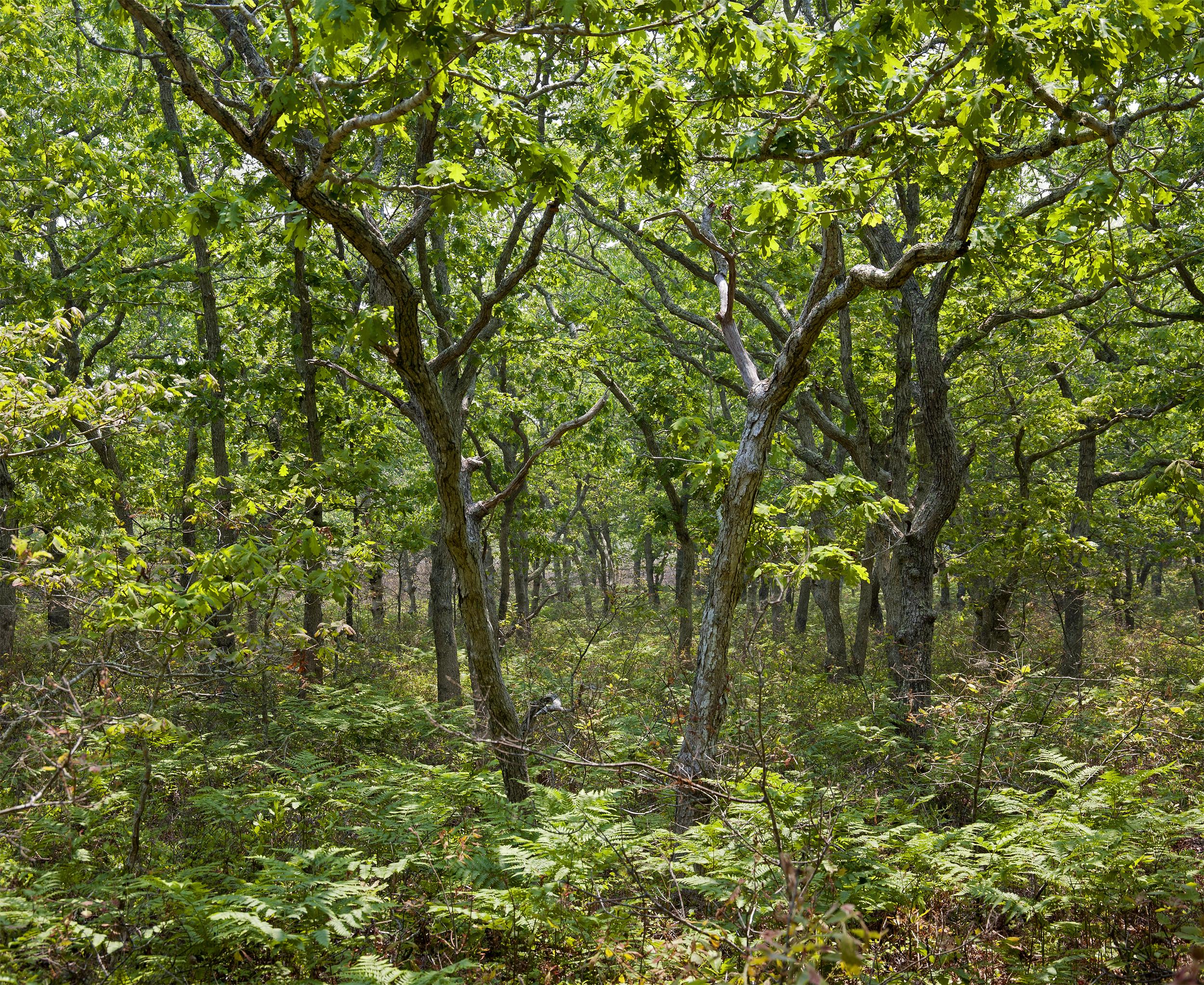Vineyard Forest -