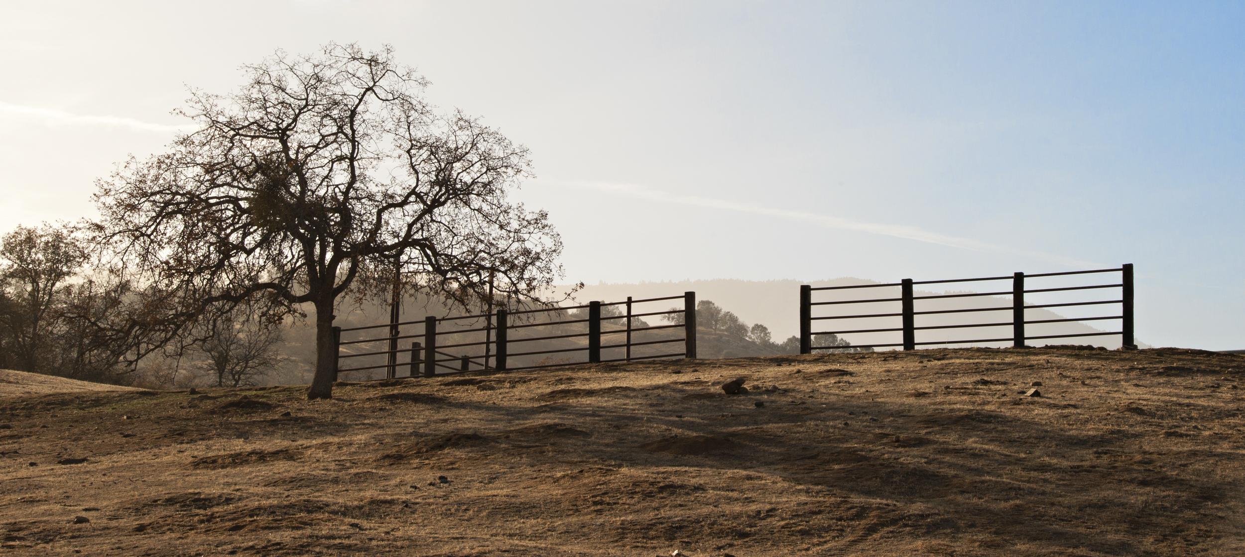 Tree & Fence, Tehachapi -