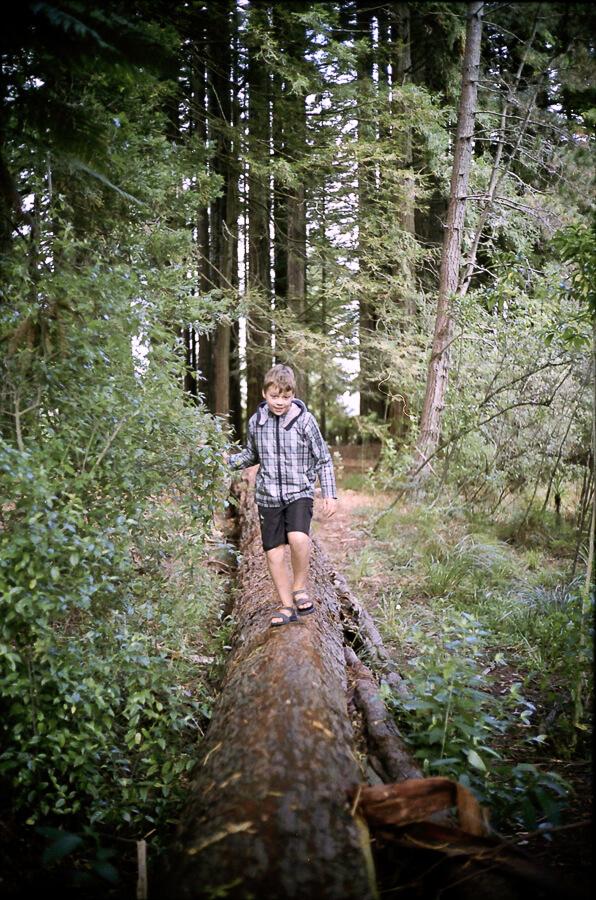 seeing a way back - boy walking on a fallen tree.jpg