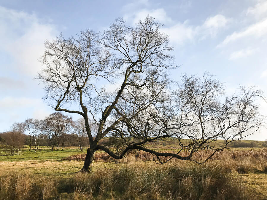 The Reluctant Photographer - Longshaw Tree.jpg