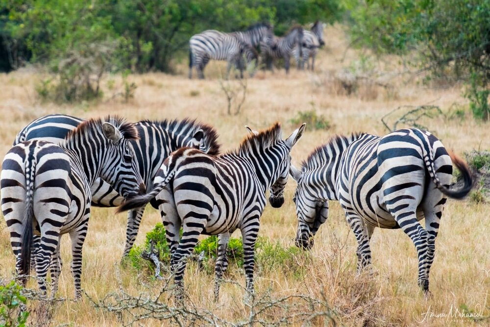 5 Ways to Experience Safari in Uganda — Triple F Photo Tours: Change Lives and Improve Your Photography On Our Photo-Tour to Uganda