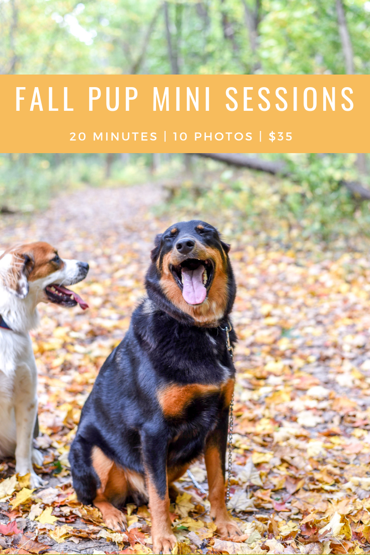 Fall Pup Minis.png