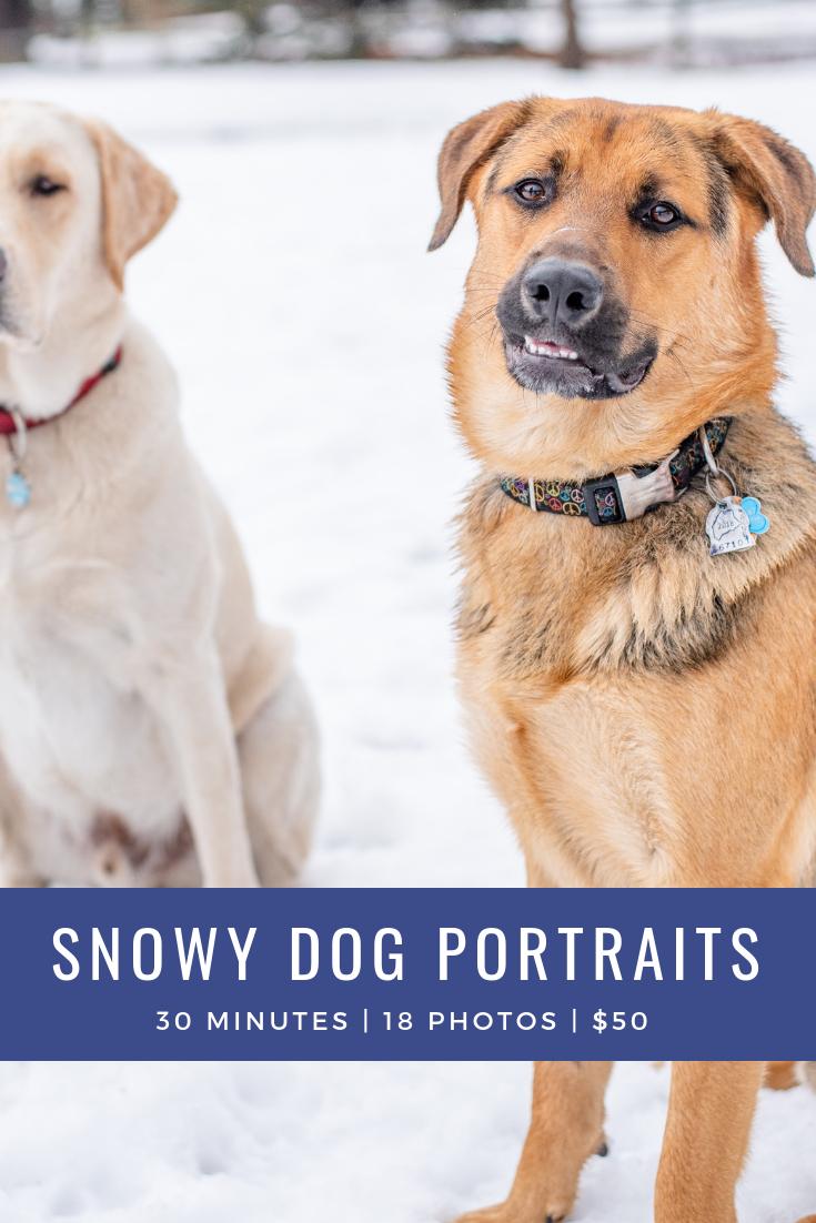 Snowy Dog Portraits.png