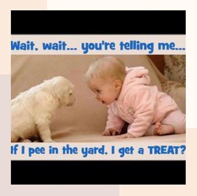 Happy Saturday...a little laughter to start your rainy day! This rainy weekend is the perfect time to read my potty training manual and toddler sleep guide...dm me for February deal! 📷 from my pal @potty_fairy #toddlersleephelp #pottyshop #sleepshop #yesyoucanpottytraining #lovetoddlers #cribtobed #cribtobedtransition #toddlersleep #ocmoms #lamoms #nymoms