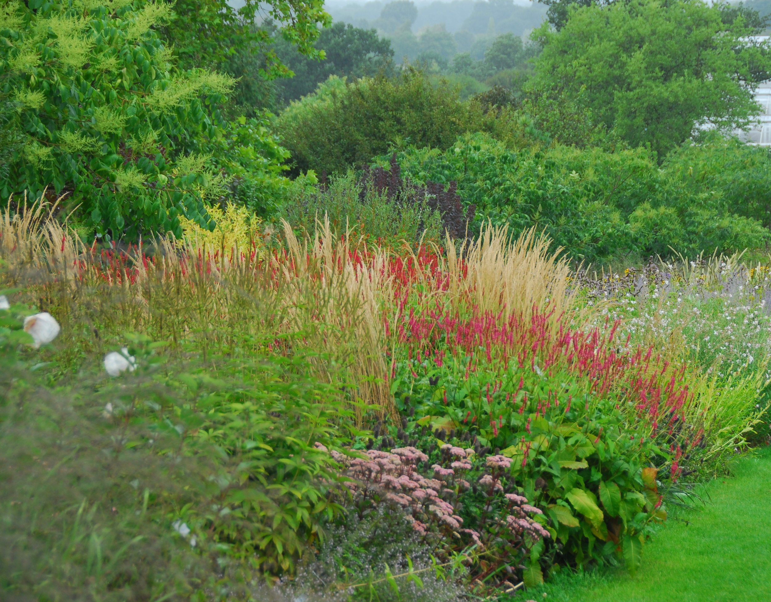 """WISLEY   """"Where else can you see and compare a traditional perennial border, double Piet Oudolf borders and a huge planting by Tom Stuart-Smith on one location? The home of the RHS might be a little institutional, but it is also fabulously instructional!"""""""