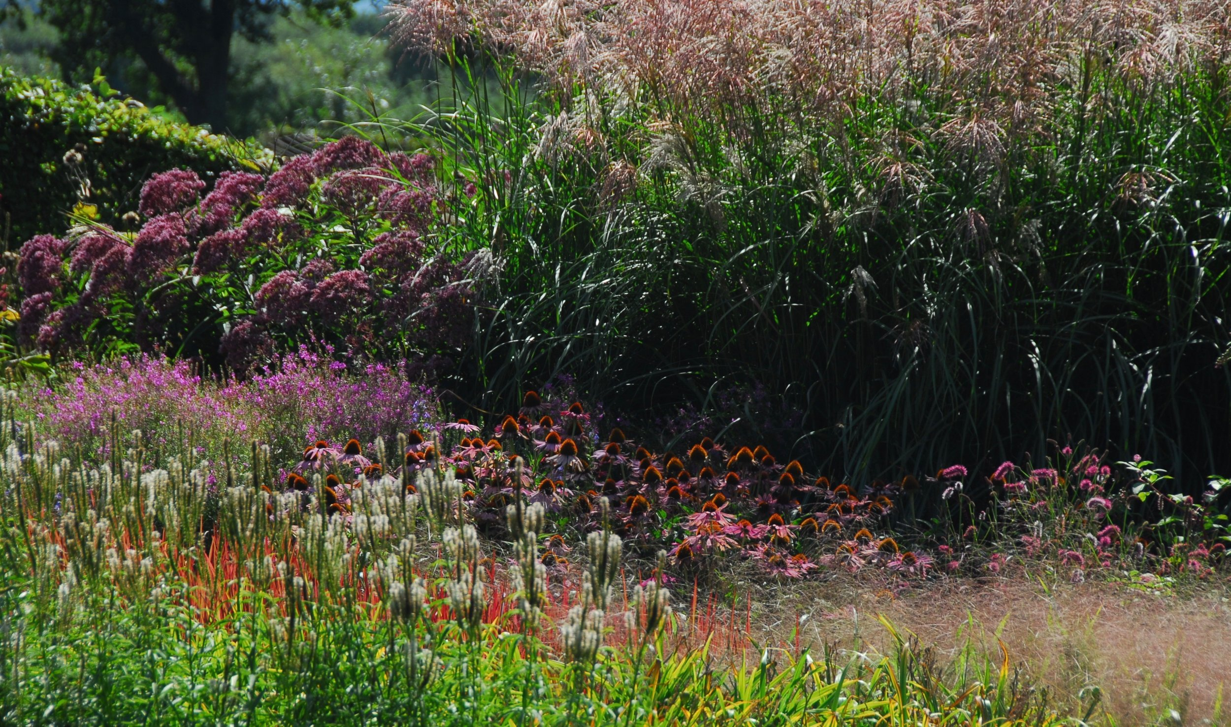 """SUSSEX PRAIRIE GARDEN   """"Every designer of perennial plantings develops their own style, and the creators of Sussex Prairie Garden reveal theirs in huge, chunky sweeps, capable of making a big visual impact on a big site. A very simple layout holds layer upon layer of detail, with late-flowering perennials in infinite combinations."""""""