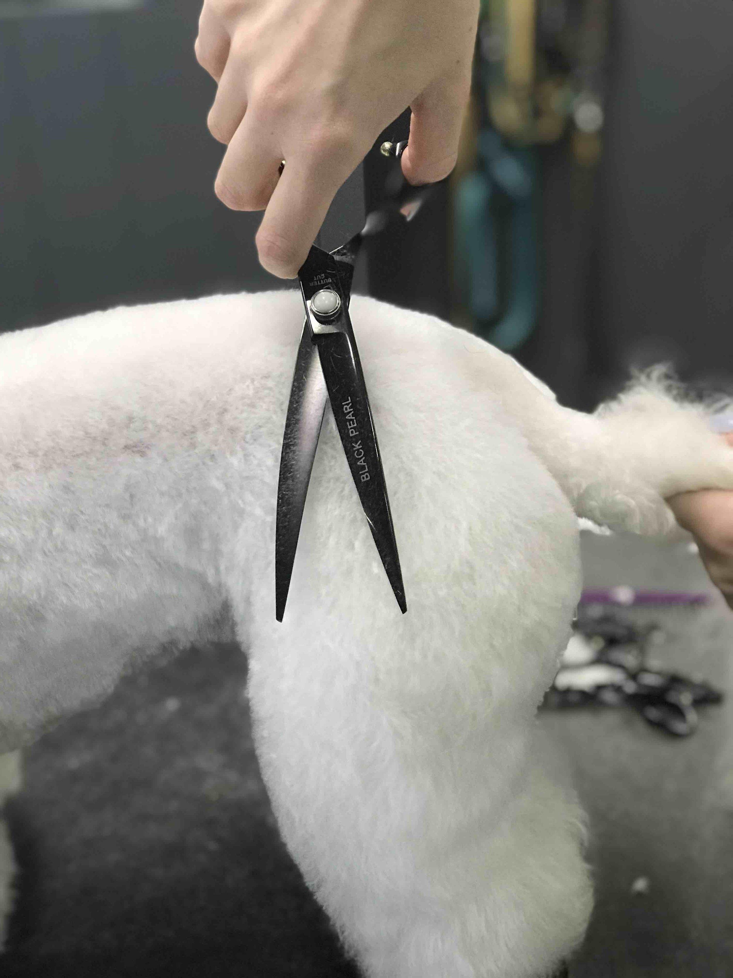 dog grooming scissoring low res.jpg
