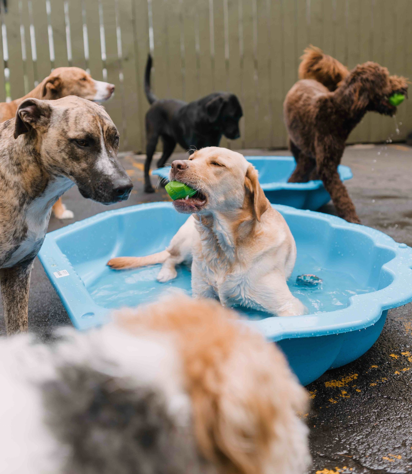 dog+daycare+in+Auckland.jpg