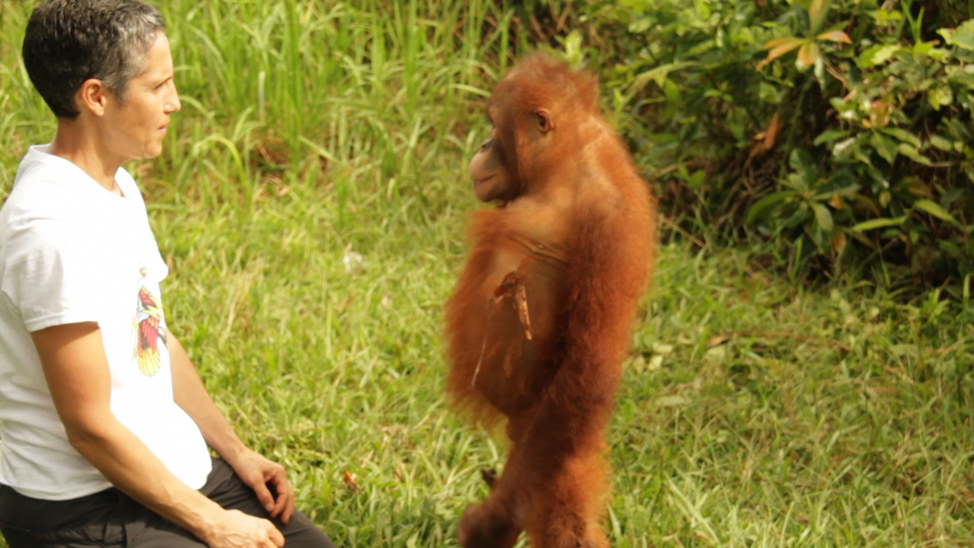 communicating with orangutang