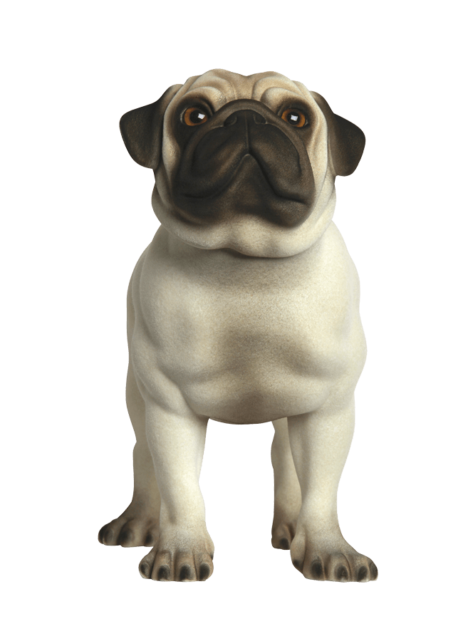 "PUG - MARTY POS 2 Realistic Flocked Finish    ht 15 ¼""   Width 9 ¾""  Length 13 ¼"""