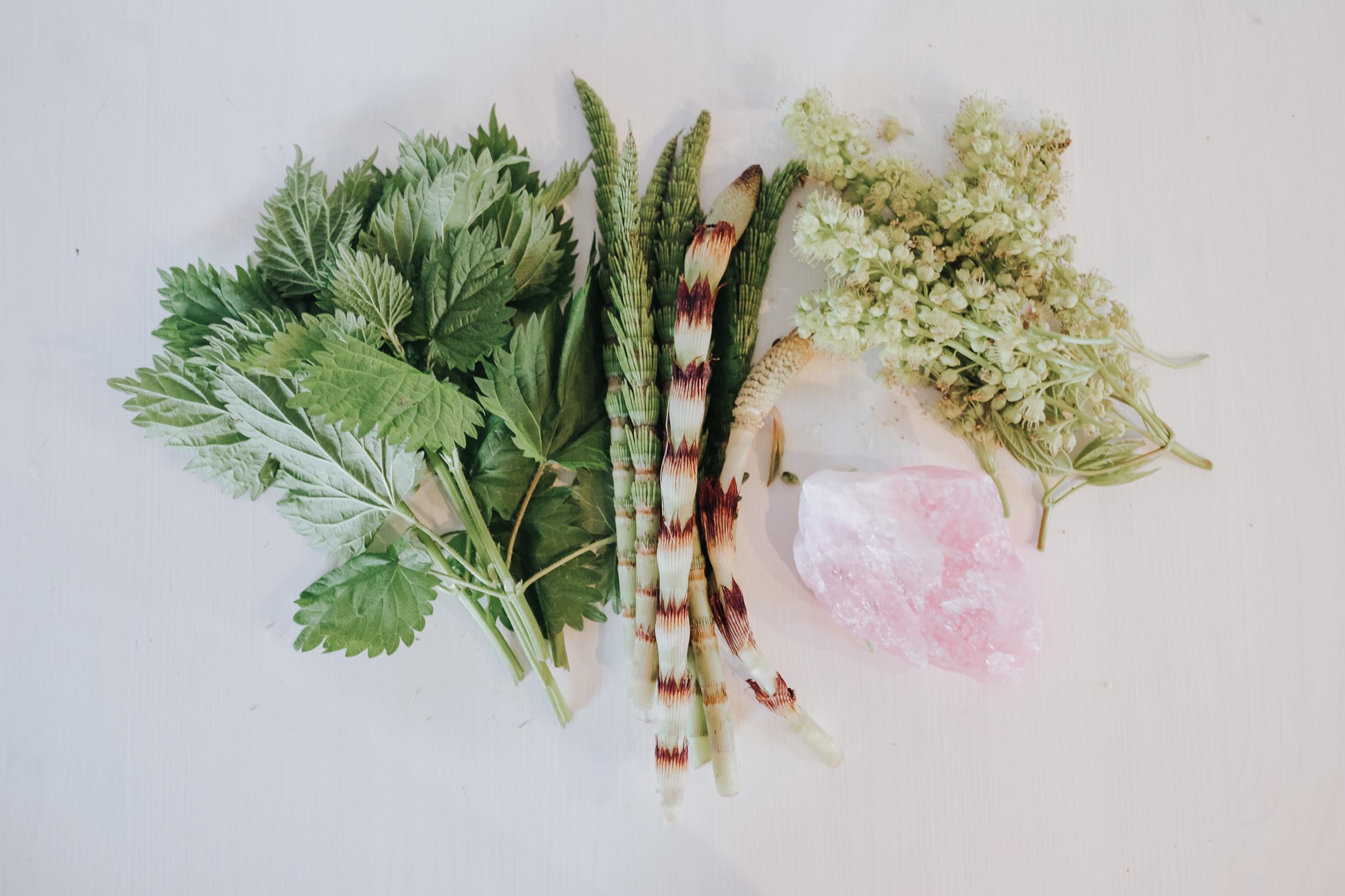 From left: stinging nettle, horsetail, maple blossom
