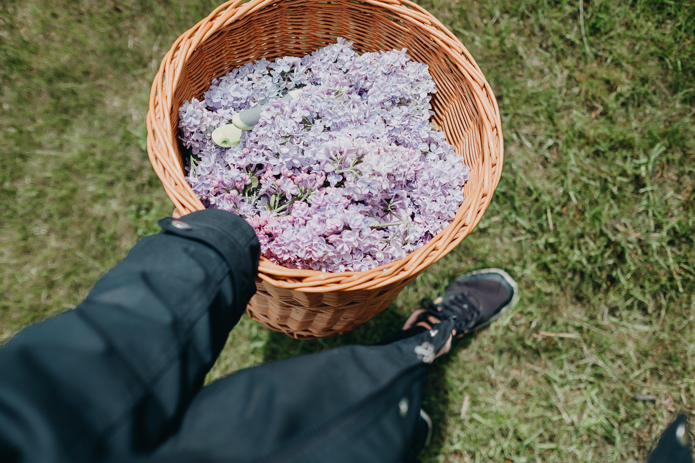 Lilacs (5 av 8).jpg
